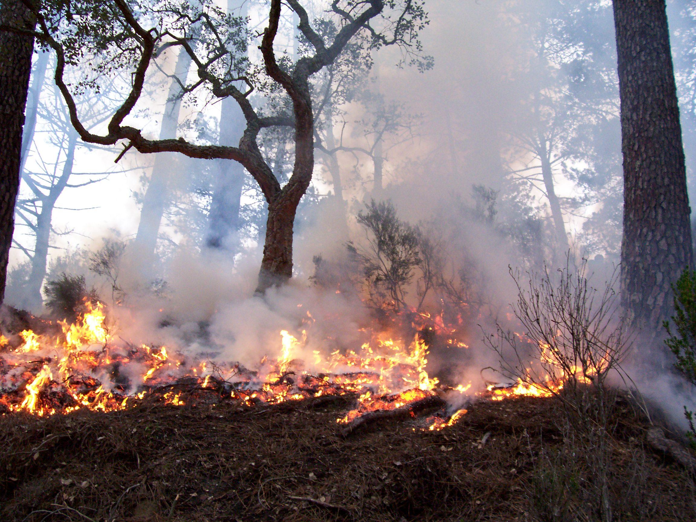 Presentadas las claves para prevenir los incendios forestales
