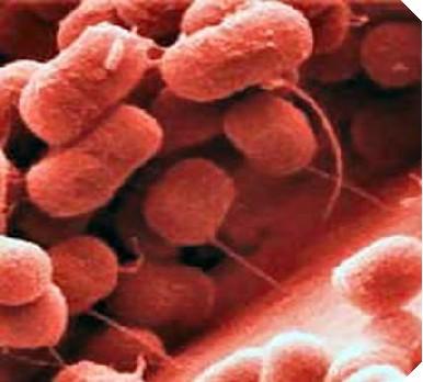 Acinetobacter-baumannii